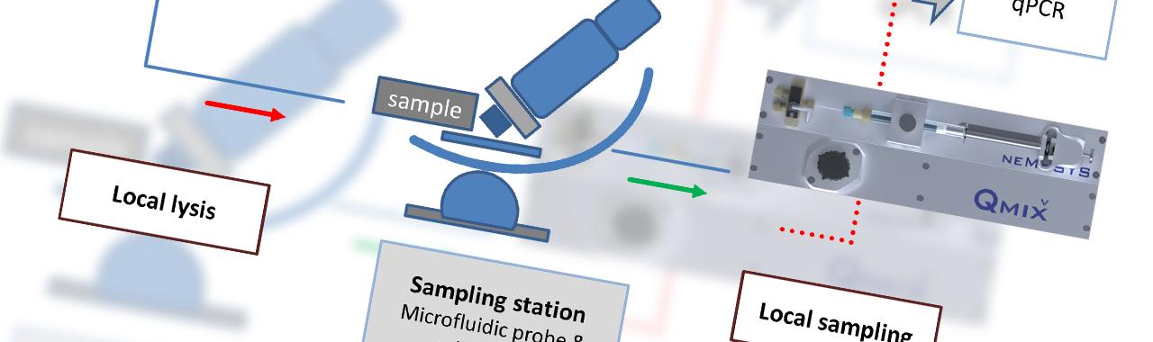Selective local lysis and sampling of biological samples
